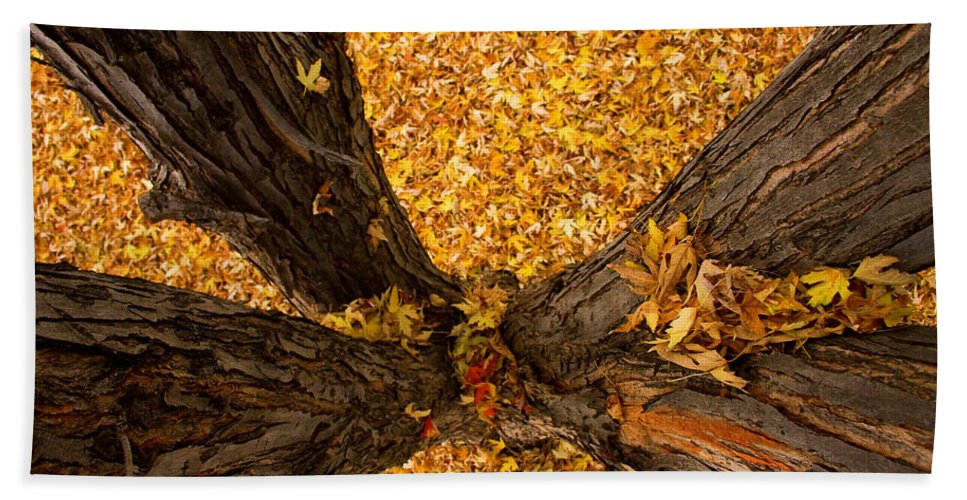 Maple Beach Towel featuring the photograph Fall by James BO Insogna