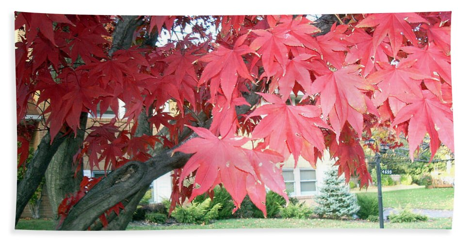 Fall Pictures Beach Towel featuring the photograph Fall Reds by Karin Dawn Kelshall- Best