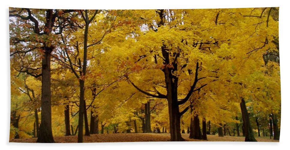 Fall Beach Towel featuring the photograph Fall Series 5 by Anita Burgermeister