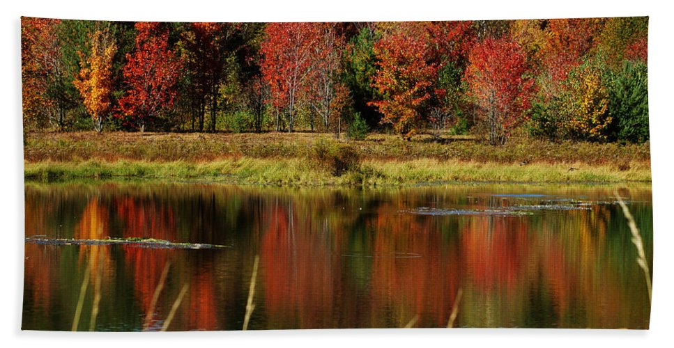 Autumn Beach Towel featuring the photograph Fall Splendor by Linda Murphy