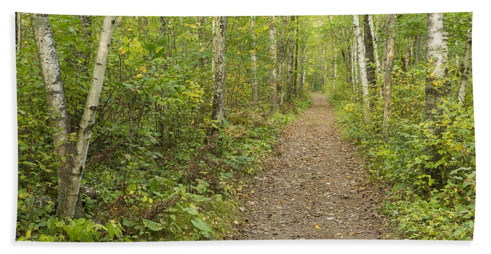 Trail Beach Towel featuring the photograph Fall Trail Scene 40 by John Brueske