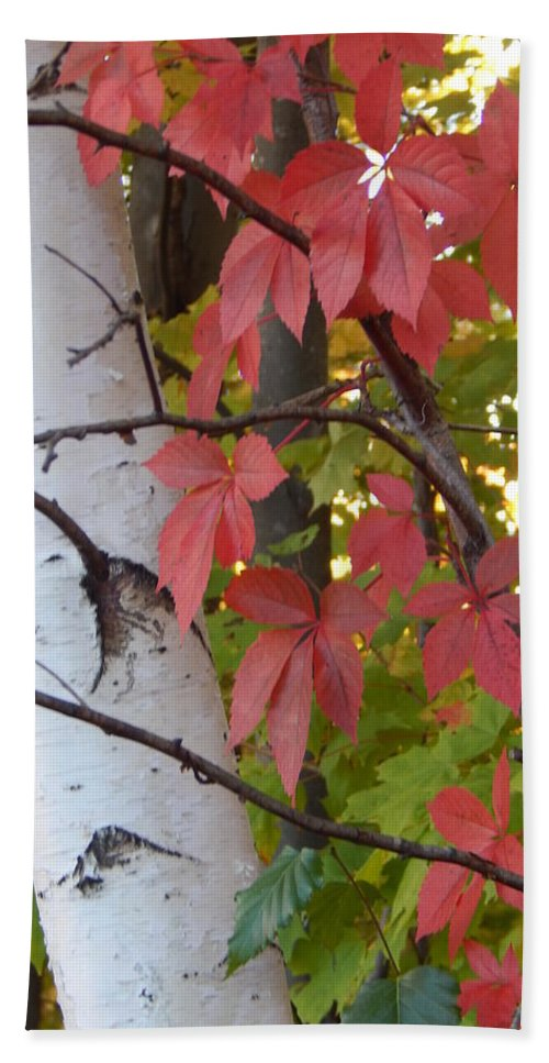 Woods Beach Towel featuring the photograph Fall View by Lisa Cassinari
