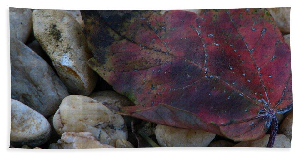 Patzer Beach Towel featuring the photograph Fallen by Greg Patzer