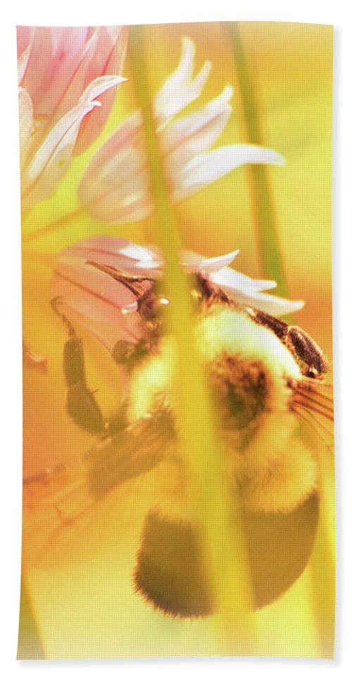 Bees Beach Towel featuring the photograph Fame Is A Bee by Bob Orsillo