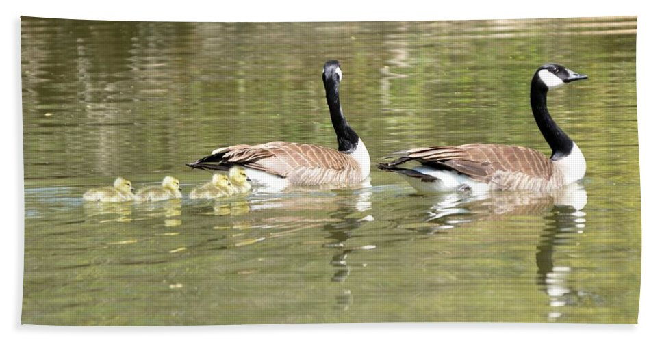 Goose Beach Towel featuring the photograph Family Outing by Bonfire Photography