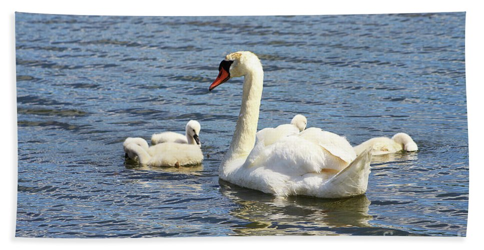 Swan Beach Towel featuring the photograph Family Time by Alyce Taylor