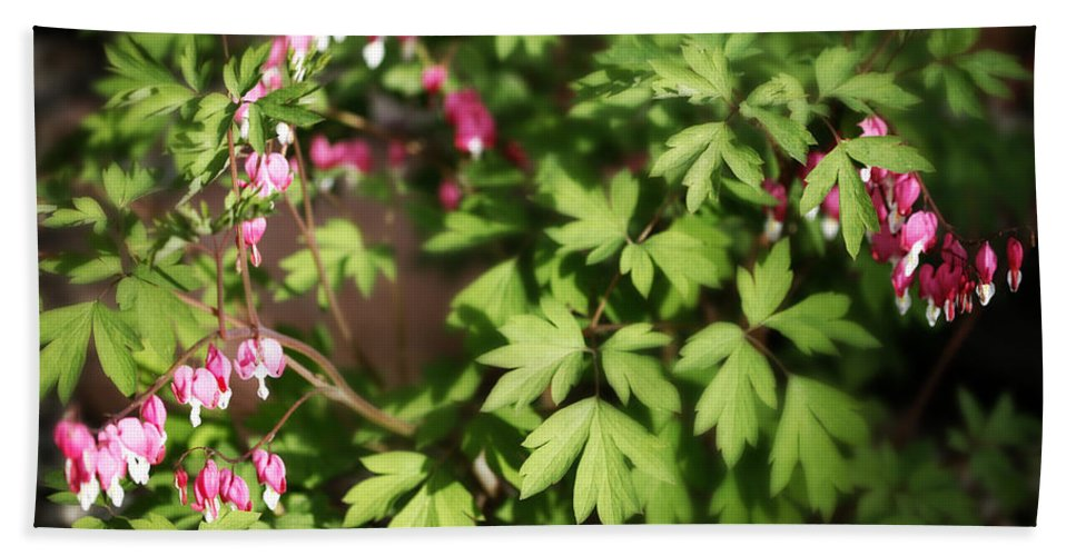 Flower Beach Towel featuring the photograph Fanciful Bleeding Hearts by Marilyn Hunt