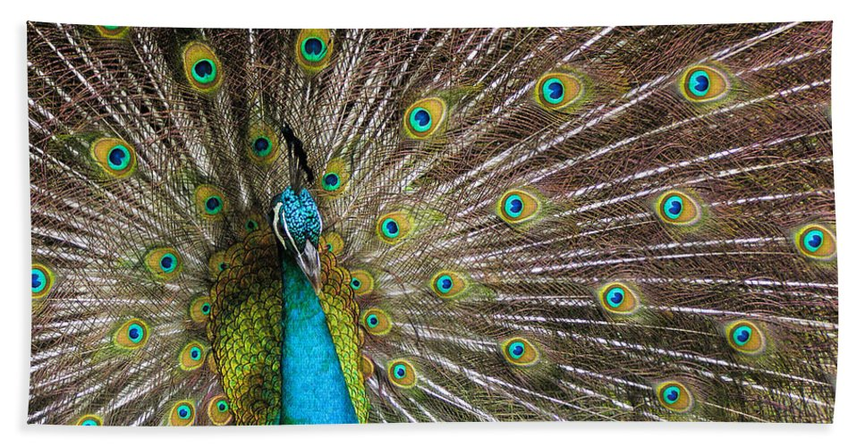 Avian Beach Towel featuring the photograph Fanfare by Alana Thrower