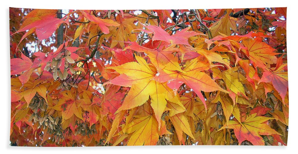 Fall Pictures Autumn Pictures Fall Leaves Painting Yellow Paintings Fall Colors Painting Greeting Card Painting Seasonal Painting Seasons Painting Botanical Painting Tree Painting Beach Towel featuring the photograph Fantasy Of Fall by Karin Dawn Kelshall- Best