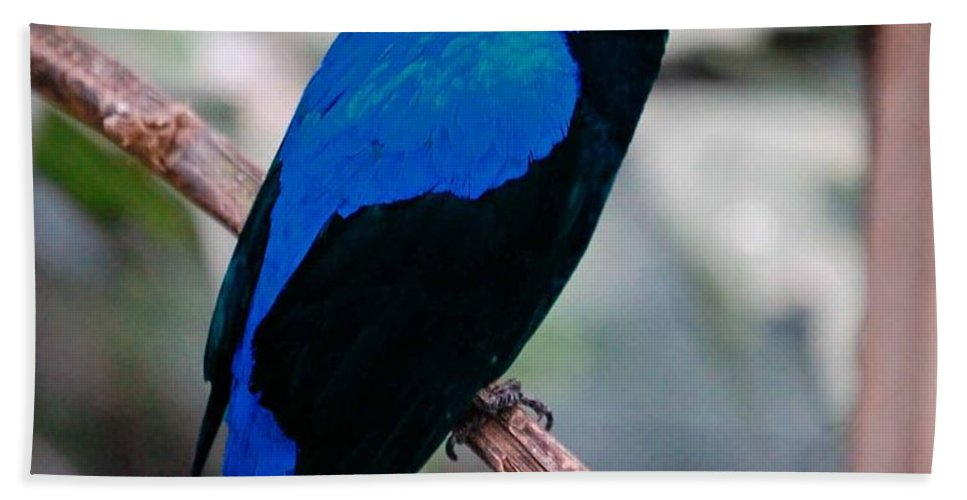 Fairy Bluebird Beach Towel featuring the photograph Feathered Fairy by DigiArt Diaries by Vicky B Fuller