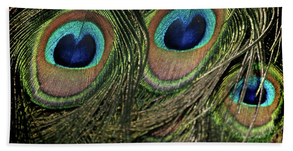 Feathers Beach Towel featuring the photograph Feathers by Ernie Echols
