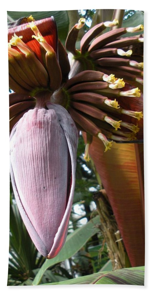 Plant Beach Towel featuring the photograph Feed Me by Nelson Strong