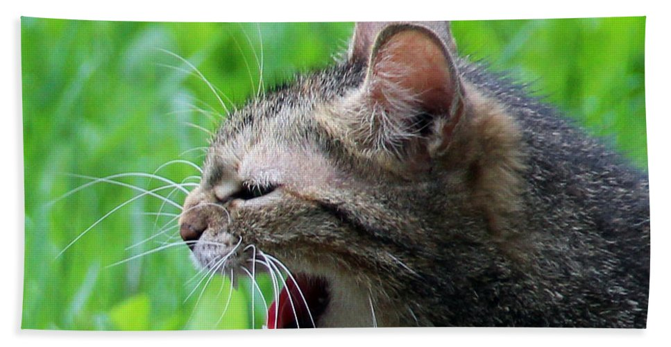 Feline Beach Towel featuring the photograph Aggressive Cat by Sergey Lukashin