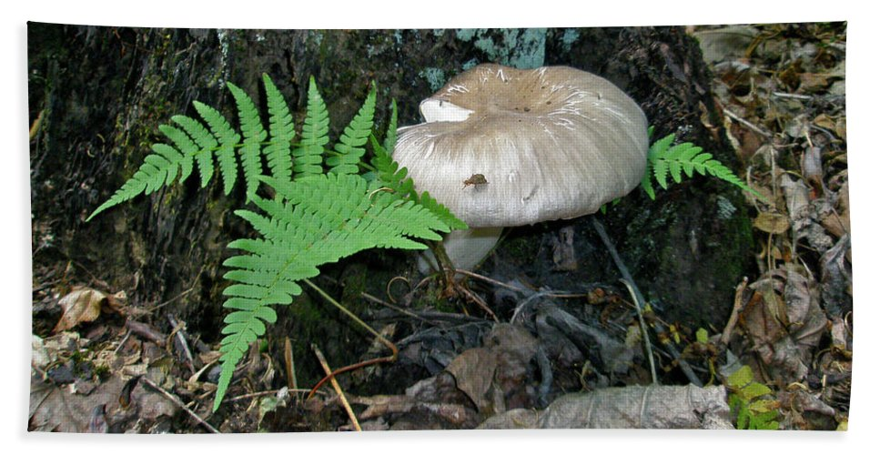 Mushroom Beach Towel featuring the photograph Fern And Mushroom by Mother Nature