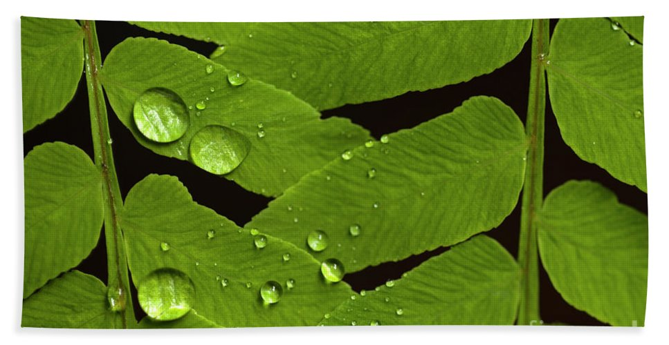 Bellevue Botanical Gardens Beach Towel featuring the photograph Fern Close-up With Water Droplets by Jim Corwin