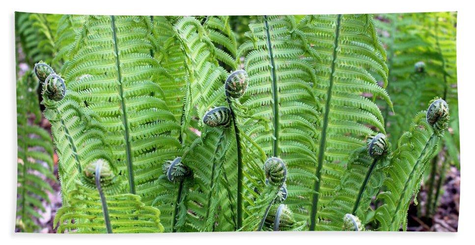 Foliage Beach Towel featuring the photograph Fern Meet And Greet by Deborah Crew-Johnson