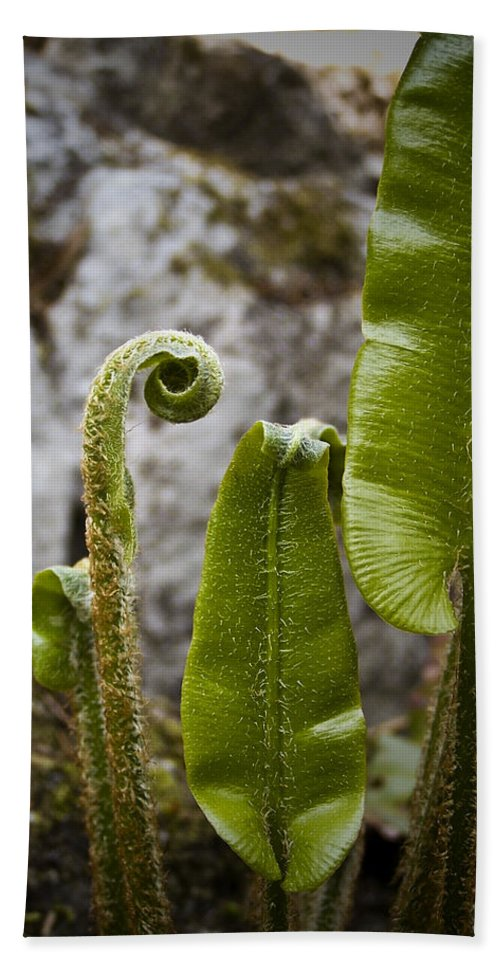 Irish Beach Towel featuring the photograph Fern Study At Blarney Castle Ireland by Teresa Mucha