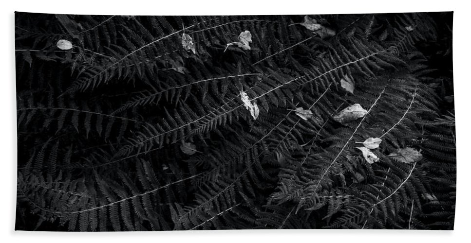 Ferns Beach Towel featuring the photograph Ferns And Leaves - Bw by James Aiken