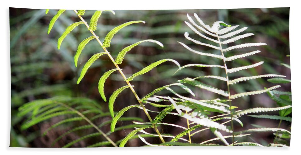 Ferns Beach Towel featuring the photograph Ferns In Natural Light by Carol Groenen