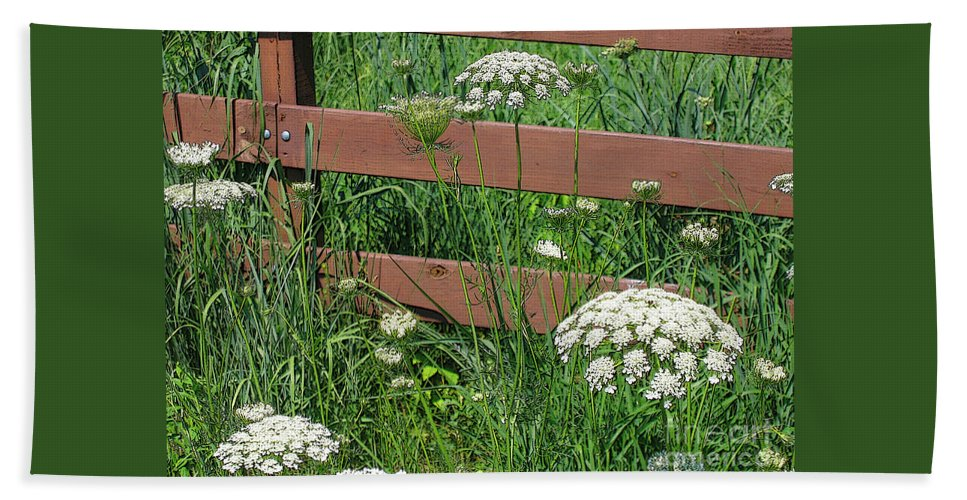 Flower Beach Towel featuring the photograph Field Of Lace by Ann Horn