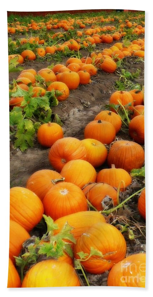 Pumpkins Beach Towel featuring the photograph Field Of Pumpkins Card by Carol Groenen