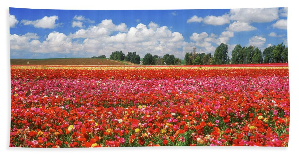 Impressionistic Beach Towel featuring the photograph Fields Of Flowers At Nir Banim by Dubi Roman