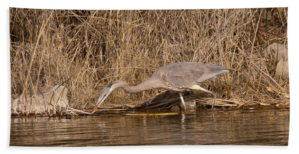Heron Beach Towel featuring the photograph Finding Fish  by Jeff Swan