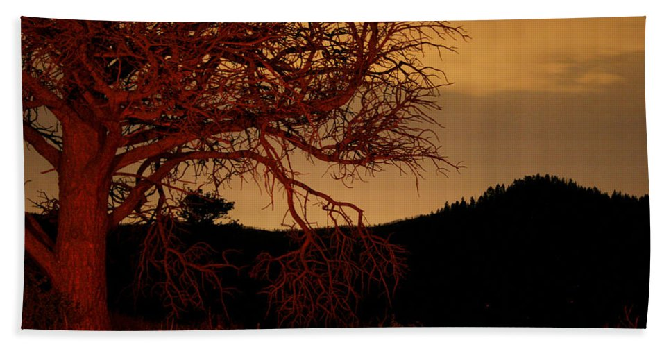 Landscape Beach Towel featuring the photograph Fire Tree by Jeffery Ball
