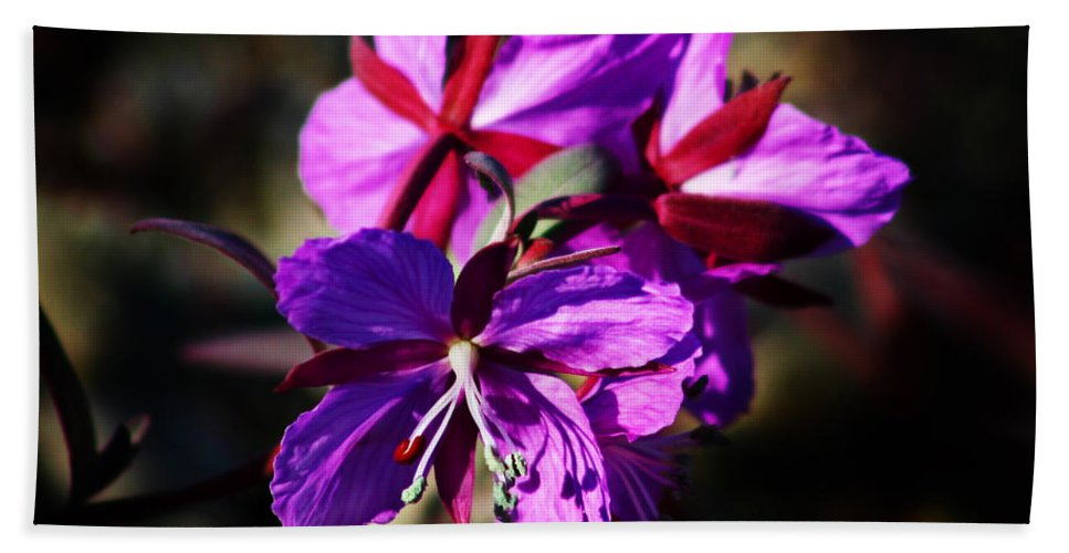 Fireweed Beach Towel featuring the photograph Fireweed by Anthony Jones