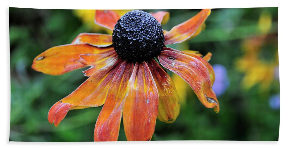 Flower Beach Towel featuring the photograph First Frost by David Arment