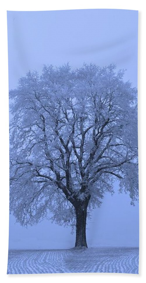 Snow Beach Towel featuring the photograph First Snow by David Dehner