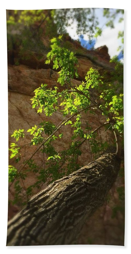 Tree Beach Towel featuring the photograph First Spring by Sarah Jane Thompson