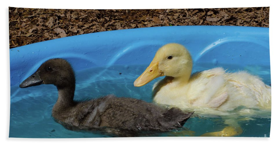 Duck Beach Towel featuring the photograph First Swimming Lesson by Donna Brown