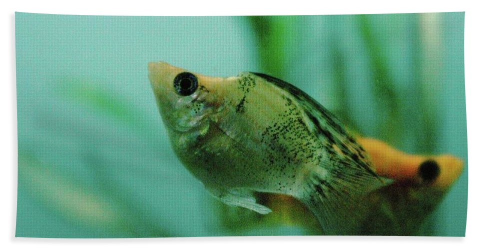 Fish Beach Towel featuring the photograph Fish by Jeff Swan