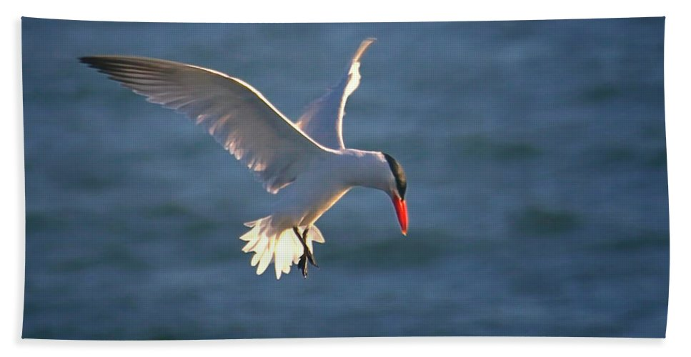 Wildlife Beach Towel featuring the photograph Fishing Tern by Albert Seger