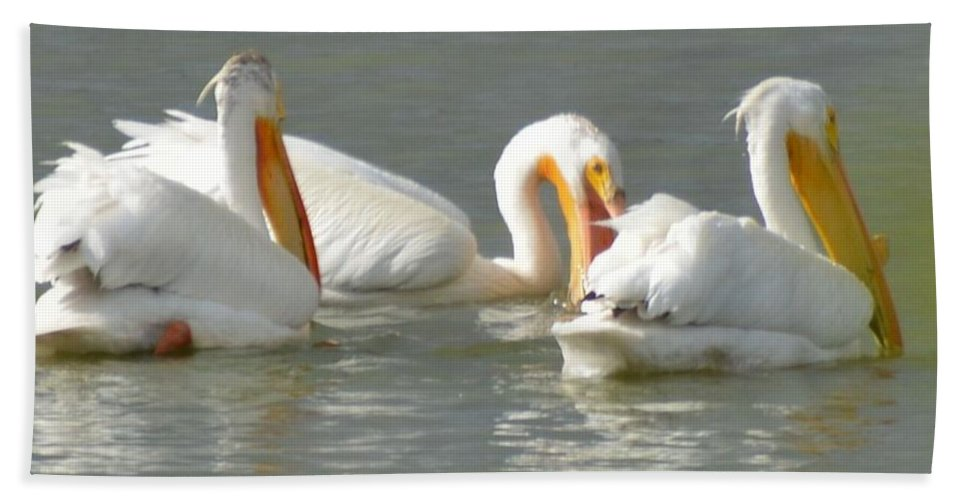 Pelicans Beach Towel featuring the photograph Fishing by Wendy Fox