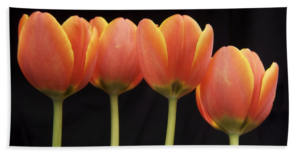 Tulip Beach Towel featuring the photograph Flaming Tulips by Michael Peychich