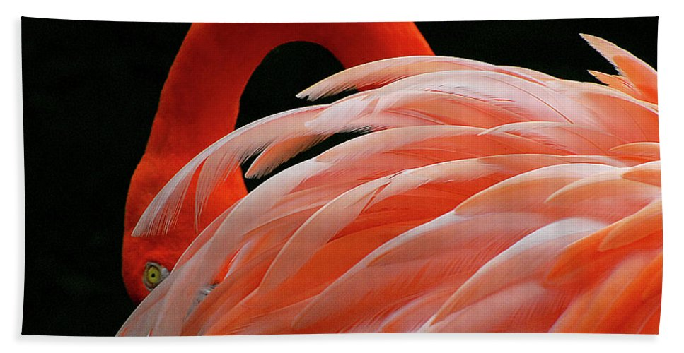 Beach Towel featuring the photograph Flamingo by Gabriel Jardim