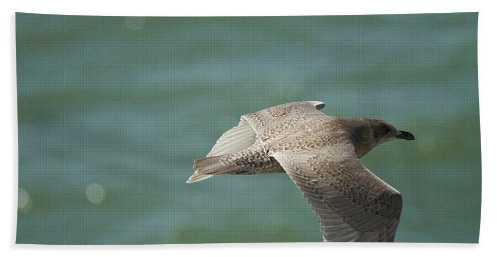 Bird Beach Towel featuring the photograph Flight by Deanna Paull