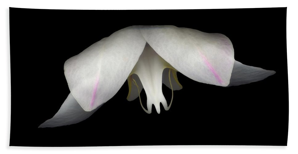 Flower Beach Towel featuring the photograph Flight by Heather Kirk