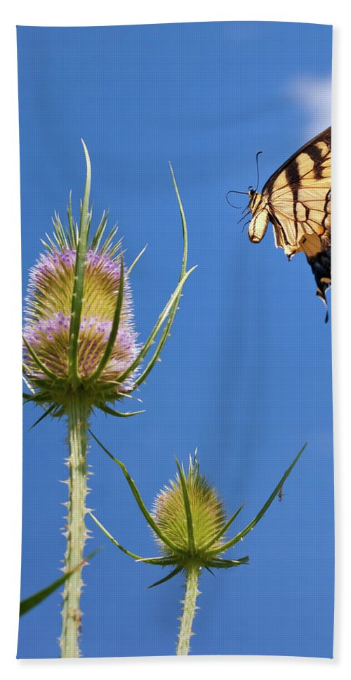 Butterfly Beach Towel featuring the photograph Flight Risk by David Lamb