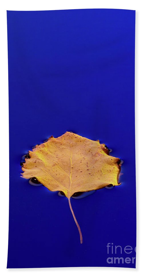 Floating Beach Towel featuring the photograph Floating Leaf 3 - Birch by Dean Birinyi