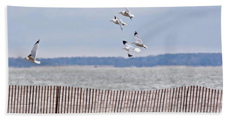 Seagull Beach Towel featuring the photograph Flock Of Gulls by Jeramey Lende