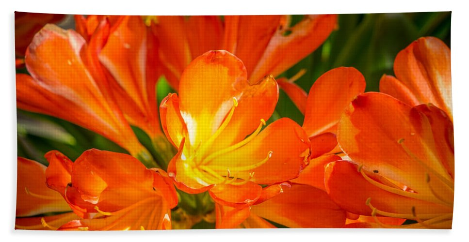 Flowers Beach Towel featuring the photograph Floral Burst by Derek Dean
