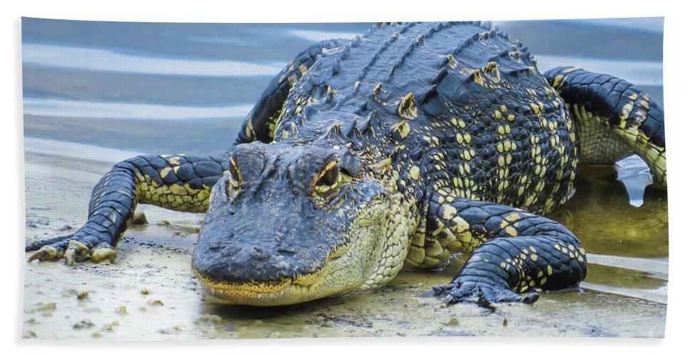 Alligators Beach Towel featuring the photograph Florida Alligator Closeup by Zina Stromberg