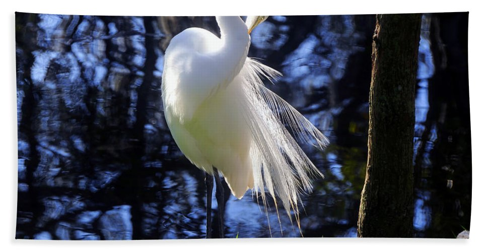 Great Egret Beach Towel featuring the photograph Florida Living by David Lee Thompson