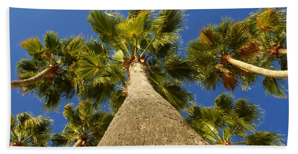 Florida. Palm Trees. Tropical Beach Sheet featuring the photograph Florida Palms by David Lee Thompson