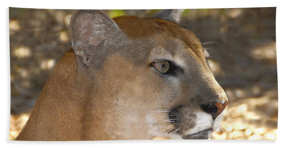 Florida Beach Sheet featuring the photograph Florida Panther by David Lee Thompson