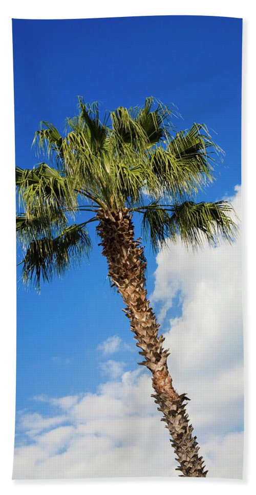 Florida State Tree Beach Towel featuring the photograph Florida State Tree by Diane Macdonald
