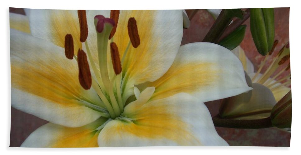Flower Beach Towel featuring the photograph Flower Close Up 3 by Anita Burgermeister